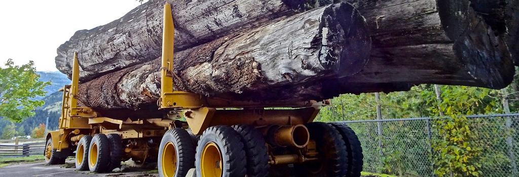 Maquinaria forestal